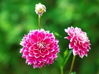 Flower garden of Yurigahara Park