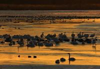 冬の伊豆沼