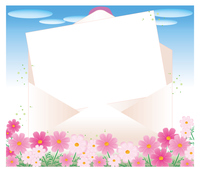 開いた封筒と便箋・コスモス畑