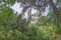 福山城 緑の中の天守閣