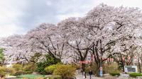 春の沼田城の風景