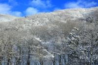 冬の関山大滝