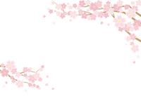 桜のある春の風景のイラスト(白背景)横長の書式で横書き用