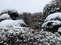 雪の覆われた植栽