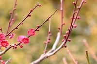 城南宮の日本庭園と梅の花
