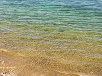 湯島の自然