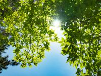 緑の透過光