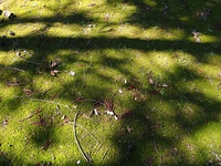 コケ生した林床