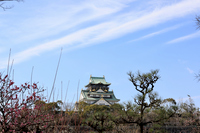 大坂城と大阪梅林