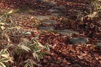 公園の落ち葉と飛び石