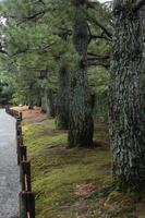 京都 城南宮 松林