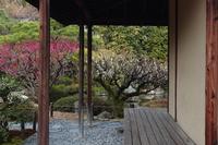 京都 城南宮 茶室の梅