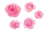 ピンクの薔薇 スケッチ風5種(クリッピングパスあり)