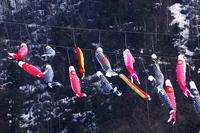 定山渓温泉の鯉のぼり