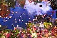 晩秋の紅桜公園