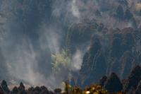 花粉が舞う杉林