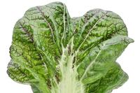 野菜 葉 高菜