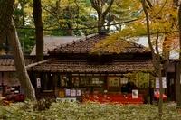 秋の神代植物園