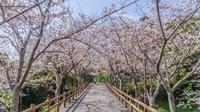 春の館山城跡の風景
