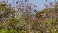 春の館山城の風景