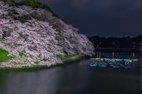 ライトアップの桜 千鳥ヶ淵