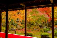 秋の圓光寺