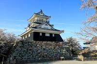 浜松城の満開桜