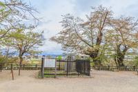 春の米沢城跡の祠堂遺跡の風景