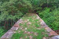 鳥取城 森の中の石垣