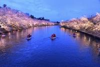 西濠と夜桜(弘前城)
