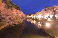中濠と夜桜(弘前城)