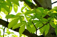 新緑、エコのイメージ