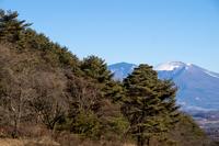 信州 長野県北佐久郡立科町旧中山道 初冬の笠取峠の松並木と冠雪した浅間山