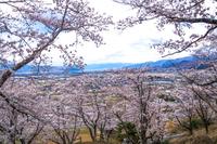 山梨県南巨摩郡富士川町 殿原スポーツ公園の桜と富士川町市街