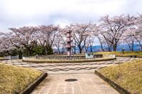 山梨県南巨摩郡富士川町 殿原スポーツ公園の桜