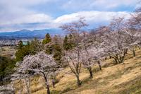 山梨県南巨摩郡富士川町 大法師公園の桜と富士川町市街