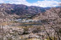 山梨県南巨摩郡富士川町 大法師公園の桜と富士山