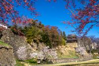 信州 長野県上田市上田城址の尼が淵より見る桜と南櫓