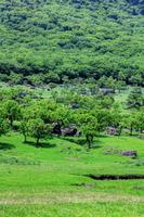 新緑の由布岳山麓