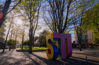 東京外国語大学と桜