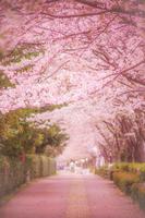 調布飛行場の桜