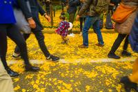 神宮外苑いちょう並木の銀杏と人々の足