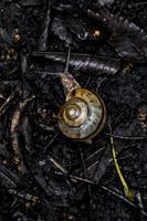 地面を這うカタツムリ