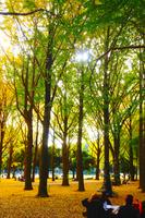 秋に染まる林