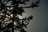 木のシルエット