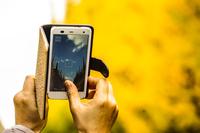 スマートフォン越しの神宮外苑いちょう並木