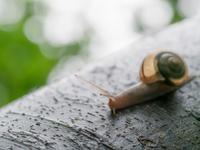 木を這うカタツムリ