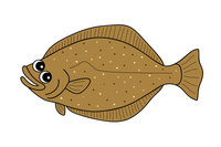 ひらめ 鮃 flounder キャラクター イラスト クリップアート