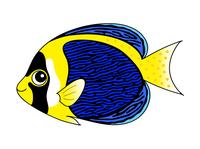 スクリブルドエンゼルフィッシュ Scribbled Angelfish キャラクター イラスト クリップアート