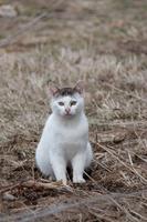 めんこい子猫
